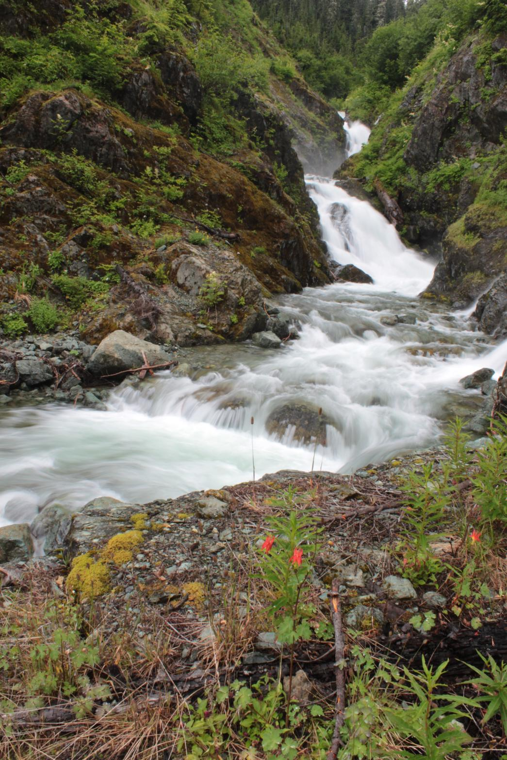 Bagley Creek Falls with columbine